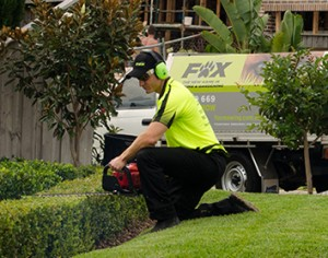 HEDGE TRIMMING & TOPIARY SERVICES